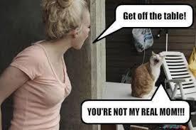 mamma-katt